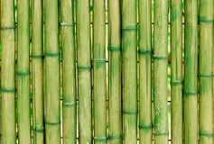 Green stems of bamboo royalty free stock photos