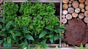 Vertical green and wood garden landscape design Stock Image