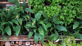 Vertical green and wood garden landscape and design Royalty Free Stock Image