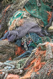Vertical heap of fishing nets Royalty Free Stock Image