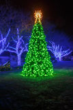 Vertical Illuminated Christmas Tree Stock Image