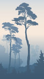 Vertical illustration of forest with tall pines. Royalty Free Stock Photography