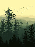 Vertical illustration of green forest mountains. Vertical illustration of forest with green coniferous trees sequoia and birds Royalty Free Stock Photography