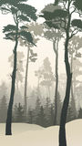 Vertical illustration of winter forest with tall pines. Stock Image