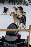A vertical image of a dog sled in Winter Park, Colorado. royalty free stock photography