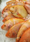 Vertical Image of Row of Fresh Raw Thai Ruby Fishes on Ice at the Market. Texture background stock photo