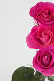 Vertical image with row of pink roses on the right Stock Photos