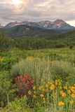 Vertical landscape with colorful wildflowers, Utah. Stock Photography
