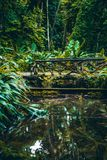 Bridge over small pond in jungle rainforest. Vertical landscape with jungle forest during summer: small cute empty bridge over lake or pond reflecting in water Stock Photography