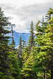 Vertical landscape view of alpine trees and snow covered mountains royalty free stock images