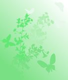 Vertical light green cherry tree Royalty Free Stock Photography