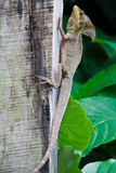 Vertical lizard Stock Image