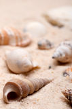 Vertical macro of seashells on sand Royalty Free Stock Photos
