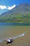 Vertical-madeira lançada à costa e linha costeira de lago bonito da montanha Fotos de Stock
