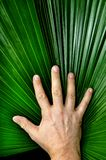 Vertical Mans Hand and Palm Leaf Stock Photos
