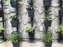 Vertical micro herb garden royalty free stock image