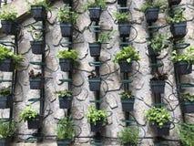 Vertical micro herb garden. Of on concrete wall in Paris stock photos