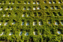 Vertical ogród na ścianie Obraz Royalty Free