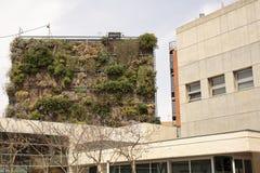 Vertical ogród w budynku Zdjęcia Stock