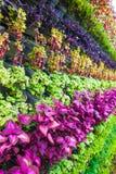 Vertical ogródu ściany Zdjęcia Stock