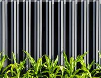 Vertical ogrodzenia ściany fasady tło Zdjęcia Royalty Free