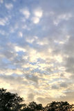 Vertical orange, blue gradient sky, white cloudscape and  tree Stock Photo