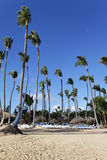 Vertical palm Stock Images