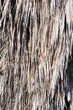 Vertical palm thatch backgrouind Stock Photography