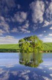 Vertical panorama of lonely tree Royalty Free Stock Image