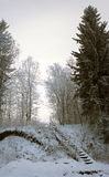 Vertical panorama of old ladder in snowy forest. Vertical panorama of snowy old ladder in winter forest Stock Photography