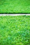 Vertical park path with green grass background Stock Image