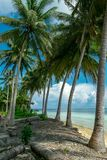 Vertical Photo of palm trees on tropical beach stock image