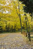 Vertical picture of Autumn trees and fallen leaves. stock photography