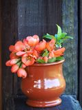Vertical picture of a small bouquet of orange flowers. royalty free stock images