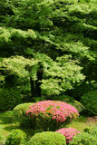 Vertical pink flower, green plant and tree in Japan public park Stock Photography