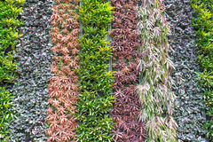 Vertical Plant. Variety of colour of plant in a vertical planting method wall Royalty Free Stock Images