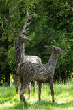 Vertical portrait of red stags from wicker Stock Photos
