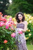 Vertical portrait of young attractive Caucasian woman with dark brown curly hair near pink roses bush royalty free stock images