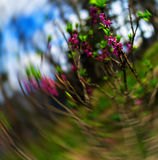 Vertical purple flowers zoom abstraction Royalty Free Stock Photo