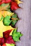 Vertical rama Kolorowi liście Fotografia Royalty Free