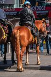 Vertical rear view of a mounted New York City policeman in Times Square near a hotdog restaurant. New York, NY - April 3, 2019: New York, NY - April 3, 2019 stock photo