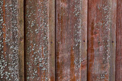 Vertical red plank wall with mold Stock Photography