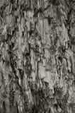 Vertical resistido natural da textura de Grey Taupe Cut Tree Stump o grande detalhou Gray Lumber Background destruído danificado  foto de stock