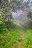 Vertical Roan Mountain Rhododendron Trail Fog Stock Photography