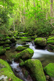 Vertical Roaring Fork Creek Smoky Mountains Tennessee Stock Photo