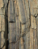 Vertical rock background Royalty Free Stock Photos