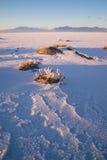 Vertical Sage Brush Frozen Ground Salt Flats Utah Desert Royalty Free Stock Photos
