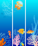 Vertical sea life banners Stock Photography