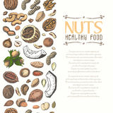 Vertical seamless background with colored nuts and seeds. Vector illustration for your design Royalty Free Stock Photos