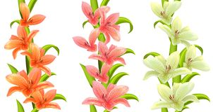 Vertical seamless patterns with lilies Stock Images